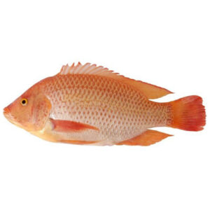 Frozen Red Tilapia fish - 800g